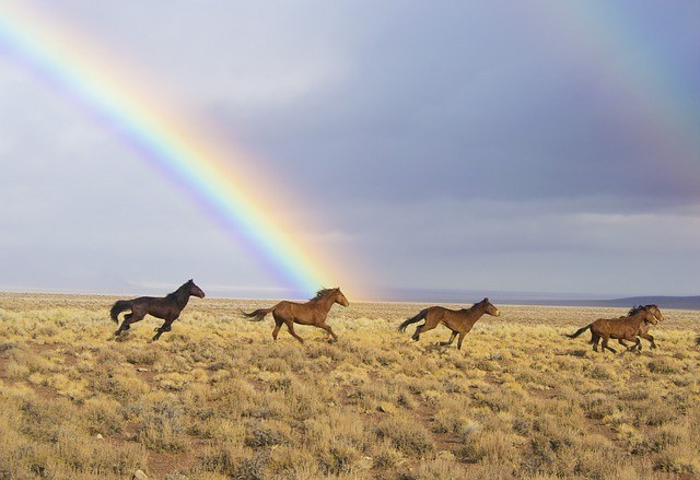 best Rainbow Brite Horse
