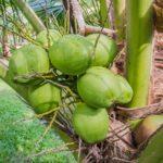 10 Best Coconut Perfume